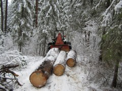 low impact logging
